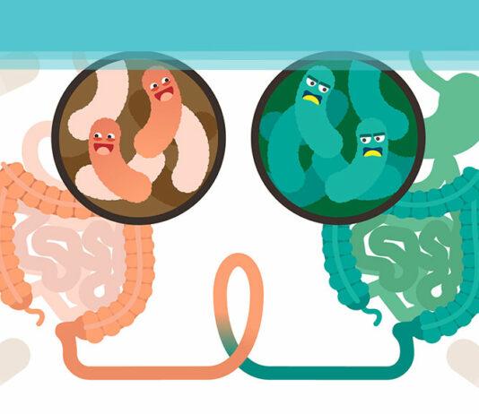 Microbioma Intestinal - A ligação entre a Imunidade e Intestino