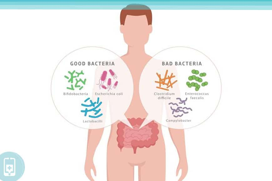 Microbioma Intestinal - Bactérias boas e ruins