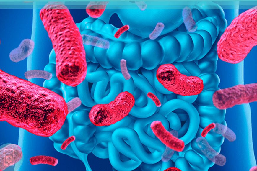 Microbioma Intestinal e Imunidade