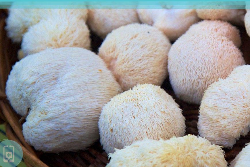 Cogumelos Medicinais - Juba de Leão