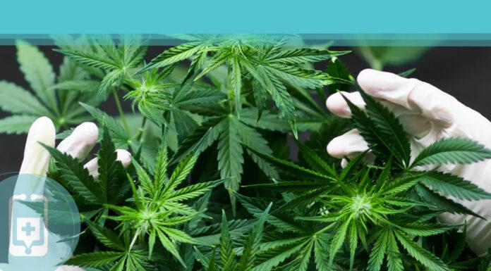 Cannabis - Conheça suas propriedades na luta contra o COVID-19