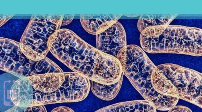 """Mitocôndrias - A importância das """"usinas de energia das células"""""""