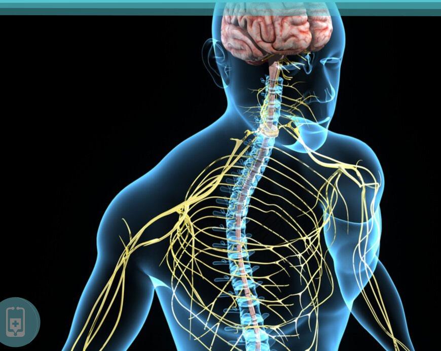 Colina e Sistema Nervoso