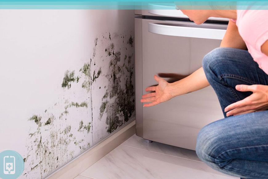 Toxicidade por mofo em ambientes